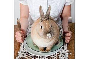Anständig essen, Karen Duve