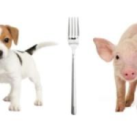 Fleisch essen - Teil 1: Ist es normal?