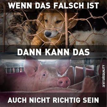RICHTIG-FALSCH